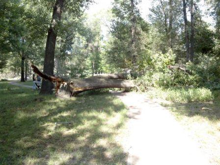 упало дерево