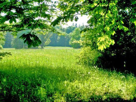 зелень_деревья и трава
